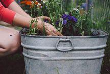 Gardening / by Michelle Lynn