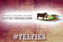 PEI Cattle Producers / Love your food? Meet your Canadian Beef farmers in P.E.I.
