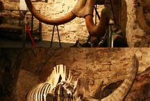 MUSEOS / Recogemos todos los #museos diferentes, distintos que se encuentren en #Spain. #España