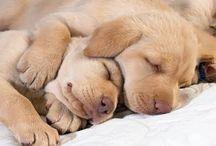 jó éjszakát !