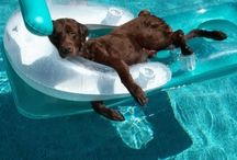 Canine Capers / What a life. The life of a dog. Lots to love. / by Jillian Crider