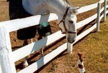 Horsey goodies