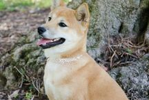 Gemstone Collar Pet Collection