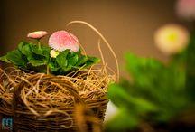 deco - spring / Wiosna