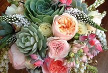 Rózsák, virágok -  Roses, flowers