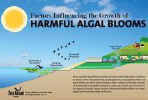 Teach - Algal Blooms