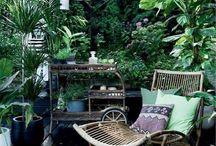 plantes / deco extérieure