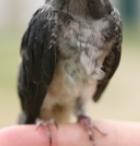 PetLvr.com - Bird Tips / Pet health and training tips for birds ... from our blog -  http://PetLvr.com