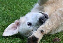 """""""süßeste"""" Hundebilder im April 2014 / Einsendungen zum Motto das """"süßeste"""" Hundebild.  Viel spaß beim durchstöbern! :)"""