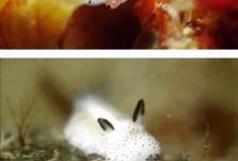 animal awesomeness