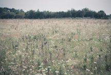 Fairytale photography / My photos
