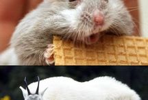 Hilarious Animals {and others}