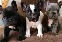 OBSESSED WITH FRENCHIES!!
