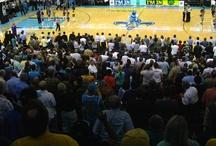 Pelicans Fans / New Orleans Pelicans Fans aka. The Best Fans In The World. / by Bourbon Street Shots