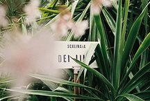 Outdoor decor & plants