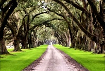 Charleston...come quickly, have found heaven / My beautiful home. Thankful for being born Southern! / by Liza Cleveland / Bon Vivant