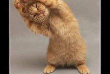 Pics | Yoga Dudes