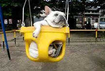 Puppy Stuff! / by Carissa Caruso