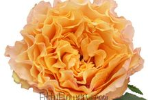 Beautiful Flowers! / Beautiful life! Beautiful flowers / by Chris-say McFayfay