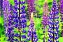 Stunning Wildflowers / Learning to ID Wildflowers