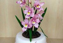 s orchidejí