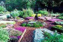 Herb Gardening / by Laureh Johnson