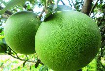health benefits pomelo