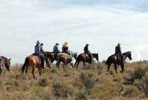 Horseback Camping Trip / by Mallory Pietrzykowski