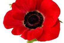 Remembrance Day / Remembrance Day