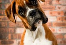 Boxers - Can't have just one / by Stacy Harrison-Butters