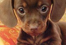 Cute!!!!!!!;)