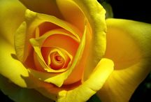 Flores / Aromas q percibir aún trás una imagen.