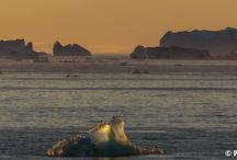 Le Groenland en fin d'été / Philip Plisson a sillonné la côte ouest du Groenland à bord du Boréal fin aout 2013.Voici une toute petite sélection .
