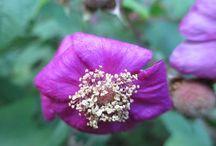 wildflowers / in the Catskills, upstate New York