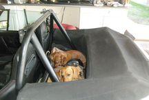 Dogs & Porsches