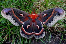 Butterflies / by Kim @ HSKids & Families