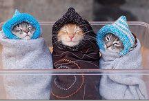 Cutest! / by Nadia Thornbird