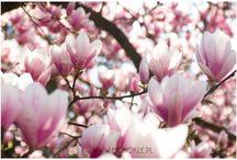 Natura / kwiatki, bratki i stokrotki