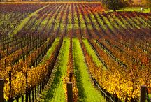 Best wineries in healdsburg, / While the masses spend their time looking for the road paved with gold, those looking for a more leisurely stroll head to the Wine Road in Northern Sonoma County.www.kazzit.com
