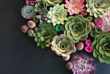 A colorful arrangement of succulents