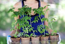 gardening  / by Sarah Montoya