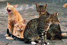 Katten communitie