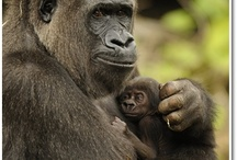 Mom and baby / Animals / by Jeannie Hertogs