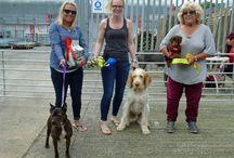 Cornwall Farmers Dog Show June 16