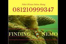 Batam Diving Tour, Contact : 081210999347
