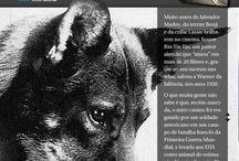 Rin Tin Tin - Susan Orlean´s Book - Punch! Customers Clipping/Editora Valentina / Clipping of the most important biography about Rin Tin Tin, Rin Tin Tin - The life and the legend, written by Susan Orlean New Yorker journalist.  Punch! PR Strategy and execution.