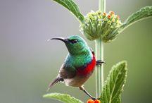 Bird Watching 2