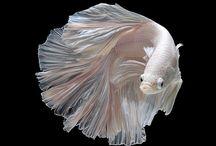 魚モチーフ