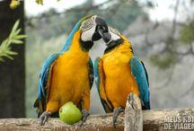 aves do brasil