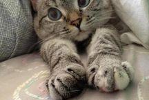 gattini adorabili / by Alex Cat